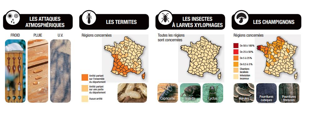 carte des infestations des parasites du bois xylophene. Black Bedroom Furniture Sets. Home Design Ideas